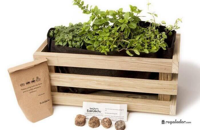 kits plantas aromáticas
