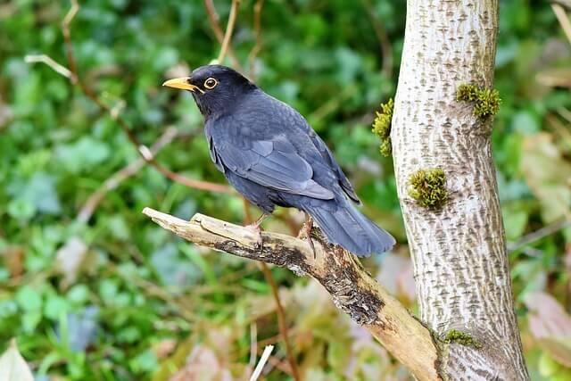 Poemas infantiles Ema y los pájaros